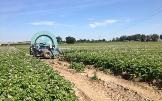 Potatoe Watering